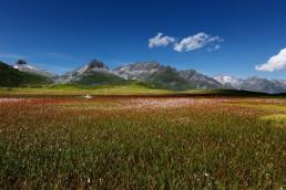 Alpen, Alpenpass, Graubünden, Oberalppass, Orte, Schweiz, Suisse, Surselva, Switzerland