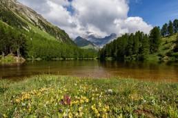 Albulapass, Alpen, Alpenpass, Bergsee, Gewässer, Graubünden, Jahreszeiten, Landschaft und Natur, Natur, Orte, Schweiz, See, Sommer, Suisse, Switzerland, lake, pass d'alvra, summer
