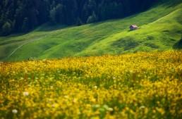 Appenzell, Appenzellerland, Frühling, Jahreszeiten, Landschaft und Natur, Natur, Orte, Ostschweiz, Schweiz, Spring, Suisse, Switzerland