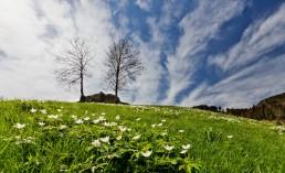 Appenzell, Appenzellerland, Clouds, Frühling, Jahreszeiten, Landschaft und Natur, Natur, Orte, Ostschweiz, Schweiz, Spring, Suisse, Switzerland, Urnäsch, Wetter, Wolken