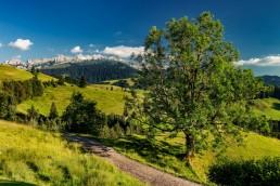 Appenzell, Hundwil, Schweiz, Sommer, Suisse, Switzerland, Säntis, summer
