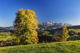 Alpstein, Appenzell, Appenzell Ausserrohden, Autumn, Baum, Berg, Fall, Herbst, Ostschweiz, Schweiz, Suisse, Switzerland, Säntis, Säntisbahn, Säntisbahn Säntis, Waldstatt