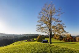 Appenzell, Appenzell Ausserrohden, Autumn, Baum, Fall, Herbst, Ostschweiz, Schweiz, Suisse, Switzerland, Waldstatt