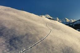 Appenzell, Appenzellerland, Jahreszeiten, Landschaft und Natur, Natur, Orte, Ostschweiz, Schweiz, Suisse, Switzerland, Säntis, Winter
