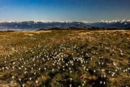 Appenzell, Appenzellerland, Frühling, Gais, Jahreszeiten, Landschaft und Natur, Natur, Orte, Ostschweiz, Schweiz, Spring, Suisse, Switzerland