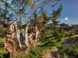 Appenzell, Appenzellerland, Frühling, Jahreszeiten, Landschaft und Natur, Natur, Orte, Ostschweiz, Schweiz, Spring, Suisse, Switzerland, Urnäsch