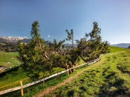 Appenzell, Frühling, Schweiz, Spring, Suisse, Switzerland, Säntis, Urnäsch