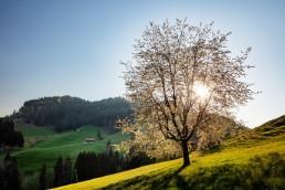 Appenzell, Appenzellerland, Frühling, Hundwil, Jahreszeiten, Landschaft und Natur, Natur, Orte, Ostschweiz, Schweiz, Sonnenschein, Spring, Suisse, Switzerland, Wetter