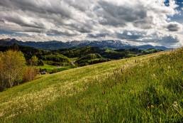 Appenzell, Appenzellerland, Bühler, Frühling, Jahreszeiten, Landschaft und Natur, Natur, Orte, Ostschweiz, Schweiz, Spring, Suisse, Switzerland, Säntis