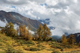 Alpen, Alpenpass, Autumn, Bernina, Berninapss, Fall, Graubünden, Herbst, Jahreszeiten, Landschaft und Natur, Natur, Orte, Passo del Bernina, Schweiz, Suisse, Switzerland