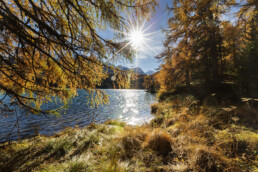 Alpen, Alpenpass, Alps, Autumn, Baum, Berg, Bergmassiv, Bergsee, Bäume, Engadin, Fall, Gewässer, Graubünden, Herbst, Maloja, Maloja-Pass, Malojapass, Schweiz, See, Suisse, Switzerland, Tree, Trees, Wald, lake