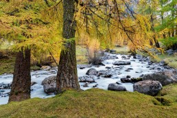 Alpen, Alpenpass, Autumn, Bach, Engadin, Fall, Fluss, Flüelapsss, Gewässer, Graubünden, Herbst, Jahreszeiten, Landschaft und Natur, Natur, Orte, Schweiz, Suisse, Switzerland