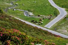 Alpen, Alpenpass, Graubünden, Objekte, Orte, Pass Umbrail, Passstrasse, Schweiz, Strasse, Strassenverkehr, Suisse, Switzerland, Umbrailpass, Verkehr