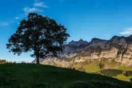 Autumn, Baum, Fall, Herbst, Jahreszeiten, Landscape, Landschaft, Landschaft und Natur, Natur, Orte, Ostschweiz, Schweiz, St. Gallen, Suisse, Switzerland, Säntis, Toggenburg, Wald