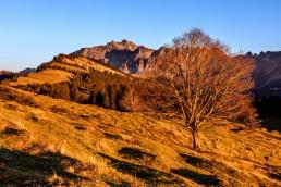 Autumn, Baum, Fall, Herbst, Jahreszeiten, Landscape, Landschaft, Landschaft und Natur, Natur, Orte, Ostschweiz, Schweiz, St. Gallen, Suisse, Switzerland, Säntis, Säntisbahn, Toggenburg, Wald