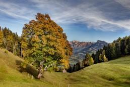 Autumn, Baum, Fall, Herbst, Jahreszeiten, Landschaft und Natur, Natur, Orte, Ostschweiz, Schweiz, St. Gallen, Suisse, Switzerland, Säntis, Toggenburg, Wald
