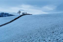 Baum, Jahreszeiten, Landscape, Landschaft, Landschaft und Natur, Natur, Orte, Ostschweiz, Schweiz, St. Gallen, Suisse, Switzerland, Toggenburg, Untertoggenburg, Wald, Winter