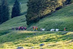 Alp, Alpaufzug, Alpen, Alpfahrt, Alps, Appenzell, Appenzellerland, Brauchtum, Brauchtum und Anlässe, Kühe, Landschaft und Natur, Orte, Ostschweiz, Schweiz, Schwägalp, Sennen, Suisse, Switzerland, Säntis, Tier, Tracht, Urnäsch, tradition