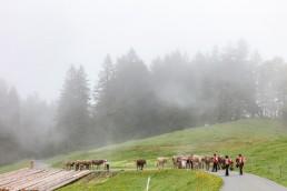 Alp, Alpen, Alpfahrt, Alps, Appenzell, Appenzell Ausserrohden, Appenzellerland, Brauchtum und Anlässe, Kühe, Landschaft und Natur, Orte, Ostschweiz, Schweiz, Sennen, Suisse, Switzerland, Tier, Tracht