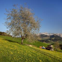 Appenzell, Appenzell Ausserrohden, Frühling, Ostschweiz, Spring, Switzerland, Säntis, spring