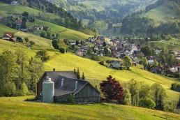 Alp, Alpaufzug, Alpfahrt, Appenzell, Appenzell Ausserrohden, Appenzellerland, Frühling, Kühe, Mai, Ostschweiz, Sennen, Spring, Switzerland, Tracht, spring, tradition