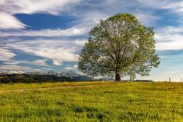 Appenzell Ausserrohden, Baum, Berge, Clouds, Hügel, Landscape, Landschaft, Ostschweiz, Schweiz, Sommer, Suisse, Switzerland, Wald, Wald AR, Wiese, Wolken, summer