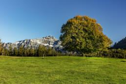 Alp, Appenzell, Autumn, Baum, Berg, Fall, Herbst, Hügel, Ostschweiz, Schweiz, Suisse, Switzerland, Säntis, Urnäsch
