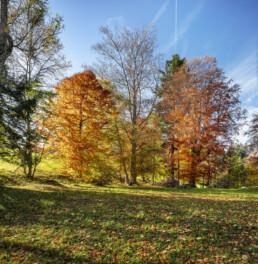Appenzell, Appenzell Ausserrohden, Appenzeller Vorderland, Autumn, Baum, Bäume, Fall, Heiden, Herbst, Ostschweiz, Schweiz, Suisse, Switzerland, Tree, Trees, Wald