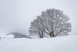 Appenzell Ausserrohden, Appenzellerland, Baum, Bäume, Ostschweiz, Schweiz, Schwellbrunn, Suisse, Switzerland, Tree, Trees, Wald, Winter