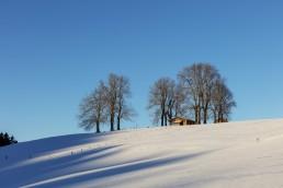 Abend, Appenzell, Appenzell Ausserrohden, Appenzellerland, Baum, Bäume, Bühler, Ostschweiz, Suisse, Switzerland, Tree, Trees, Trogen, Wald, Winter