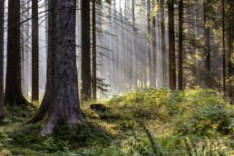 Baum, Bäume, Tree, Trees, Urnäsch, Verkehr, Wald, Wanderweg, Weg