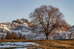 Abend, Appenzell, Appenzell Ausserrohden, Autumn, Baum, Berg, Fall, Herbst, Säntis, Urnäsch