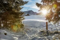 Appenzell, Appenzell Ausserrohden, Baum, Bäume, Ostschweiz, Schweiz, Suisse, Switzerland, Tree, Trees, Urnaesch, Wald, Winter