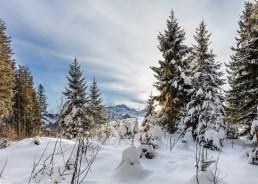 Appenzell, Appenzell Ausserrohden, Appenzellerland, Baum, Bäume, Ostschweiz, Schweiz, Suisse, Switzerland, Tree, Trees, Urnaesch, Wald, Winter