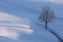 Abend, Appenzell, Appenzell Ausserrohden, Baum, Schnee, Schweiz, Suisse, Switzerland, Wald, Wald AR, Wetter, Winter