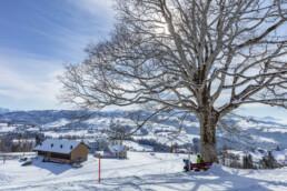 Appenzell Ausserrohden, Appenzeller Vorderland, Aussicht, Baum, Berge, Frost, Rehetobel, Winter