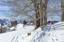 Appenzell Ausserrohden, Appenzeller Vorderland, Aussicht, Berge, Frost, Rehetobel, Winter