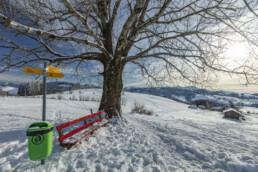 Appenzell Ausserrohden, Appenzeller Vorderland, Aussicht, Aussichtsbank, Bank, Baum, Berge, Frost, Wald, Wald AR, Winter