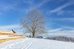 Appenzell Ausserrohden, Appenzeller Vorderland, Aussicht, Baum, Berge, Frost, Wald, Wald AR, Winter