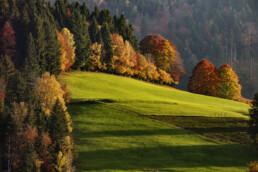 Appenzell, Appenzell Ausserrohden, Autumn, Bäume, Fall, Herbst, Ostschweiz, Schweiz, Suisse, Switzerland, Tree, Trees, Wald, Waldstatt, Wiese