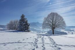 Appenzell Ausserrohden, Aussicht, Baum, Berge, Frost, Waldstatt, Winter