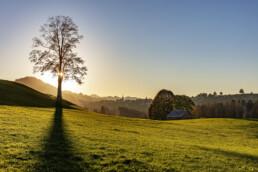 Appenzell, Appenzell Ausserrohden, Autumn, Baum, Dorf, Fall, Herbst, Ostschweiz, Schweiz, Suisse, Switzerland, Waldstatt