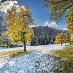 Alp, Alpen, Alps, Autumn, Baum, Berg, Bergmassiv, Bern, Berner-Oberland, Berneroberland, Fall, Haslital, Herbst, Meiringen, Rosenlaui, Schweiz, Suisse, Switzerland, alps