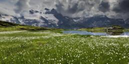 Alpen, Alps, Berge, Engadin, Frühling, Graubünden, Kühe, Schweiz, Spring, Suisse, Switzerland