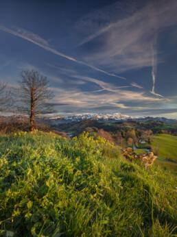 Abend, Appenzell, Appenzell Ausserrohden, Baum, Berg, Bergmassiv, Bühler, Frühling, Hügel, Ostschweiz, Schweiz, Spring, Suisse, Switzerland, Säntis