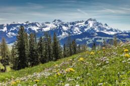 Alp, Alpen, Alps, Appenzell, Appenzell Ausserrohden, Berg, Bergmassiv, Blumenwiese, Gais, Hügel, Ostschweiz, Schweiz, Sonnenschein, Suisse, Switzerland, Wiese, alps