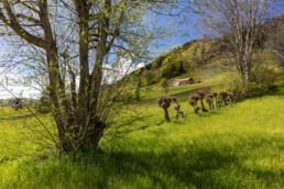 Appenzell, Appenzell Ausserrohden, Appenzellerhaus, Bauerhaus, Bauernhof, Blumenwiese, Frühling, Gais, Haus, Ortsbild, Schweiz, Spring, Streusiedlung, Suisse, Switzerland, Wiese