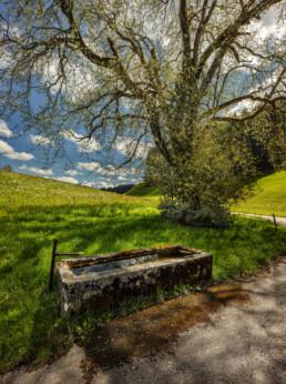 Appenzell, Appenzell Ausserrohden, Baum, Blumenwiese, Brunnen, Herisau, Ostschweiz, Schweiz, Suisse, Switzerland, Wiese