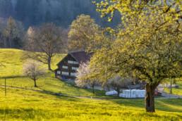 Appenzell, Appenzell Ausserrohden, Appenzellerhaus, Bauerhaus, Bauernhof, Baum, Bäume, Frühling, Haus, Herisau, Ortsbild, Ostschweiz, Schweiz, Sonnenschein, Spring, Suisse, Switzerland, Tree, Trees, Wald, Wasser