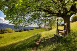 Appenzell, Appenzell Ausserrohden, Appenzeller Vorderland, Aussichtsbank, Bank, Baum, Blumenwiese, Frühling, Ostschweiz, Schweiz, Sonnenschein, Spring, Suisse, Switzerland, Verkehr, Walzenhausen, Wanderweg, Weg, Wiese